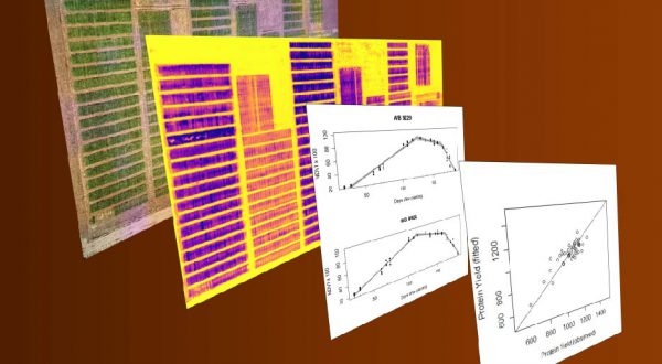 field scale phenotyping